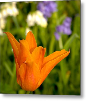 Tulip And Friends Sq Metal Print by Andy Smy