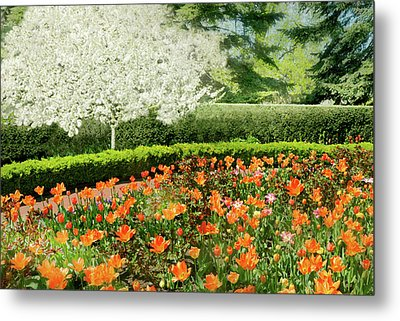 Metal Print featuring the photograph Tulip Cafe by Diana Angstadt