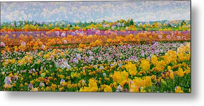 Metal Print featuring the photograph Tulip Dreams by Tom Vaughan