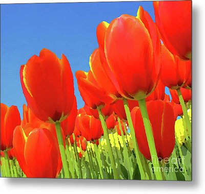 Tulip Field Metal Print by Giancarlo Liguori