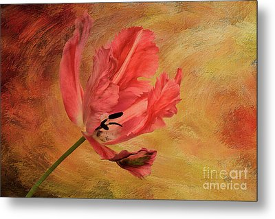 Tulip In Flames Metal Print by Lois Bryan