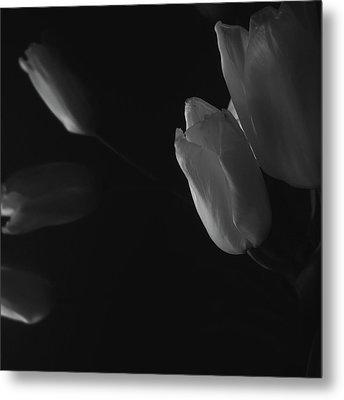 Tulip Service Metal Print by Marcus Hammerschmitt