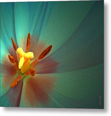 Tulip Trends Metal Print by Gwyn Newcombe