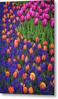 Tulips And Blue Hyacinths Metal Print