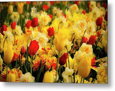 Tulips And Daffodils Metal Print by Tamyra Ayles