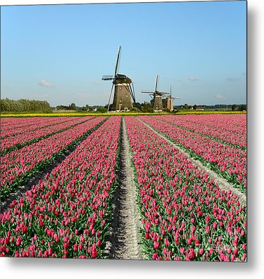 Tulips And Windmills In Holland Metal Print