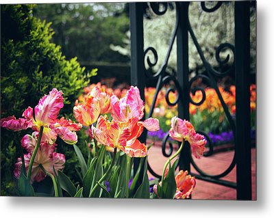 Tulips At The Garden Gate Metal Print by Jessica Jenney