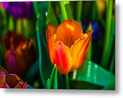 Metal Print featuring the photograph Tulips Enchanting 44 by Alexander Senin