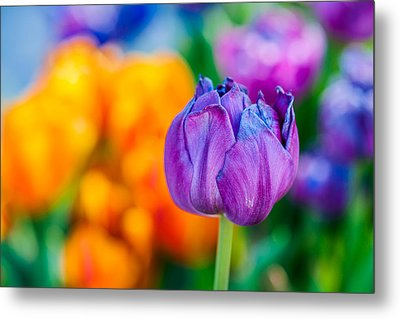 Metal Print featuring the photograph Tulips Enchanting 46 by Alexander Senin