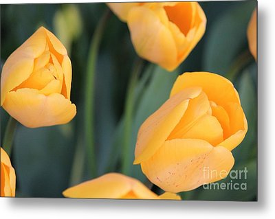 Metal Print featuring the photograph Tulips by Erica Hanel