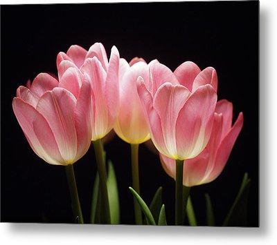 Tulips For Tania Metal Print