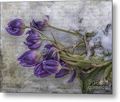Tulips Frozen Metal Print by Terry Rowe