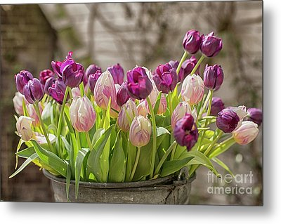 Metal Print featuring the photograph Tulips In A Bucket by Patricia Hofmeester