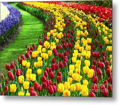 Tulips In Glorious Bloom Metal Print