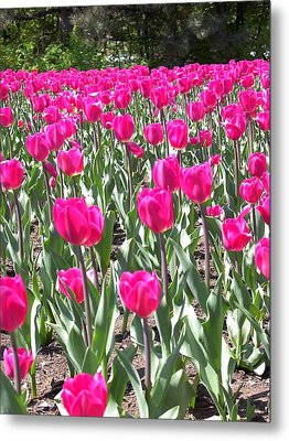 Metal Print featuring the photograph Tulips by Mary-Lee Sanders