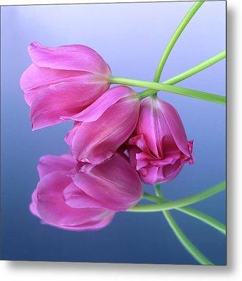 Tulips .tulipa. Metal Print by Bernard Jaubert