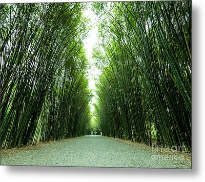 Metal Print featuring the photograph Tunnel Bamboo Trees And Walkway. by Tosporn Preede