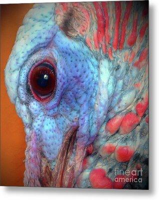 Turkey Head Shot Metal Print by Kim Pate