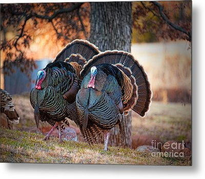 Turkey Trot Metal Print