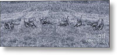 Turkeys In Field Toned Version Metal Print
