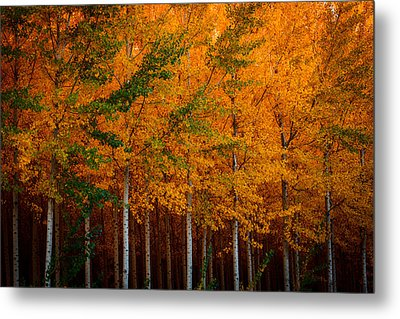 Metal Print featuring the photograph Turning Into Gold by Dan Mihai