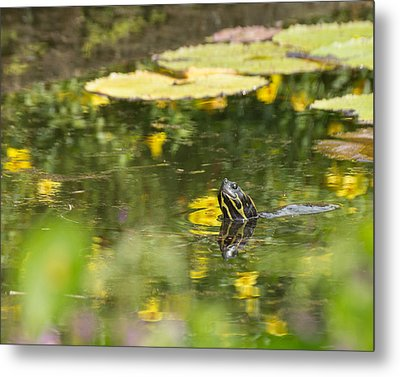 Metal Print featuring the photograph Turtle  by Julie Andel
