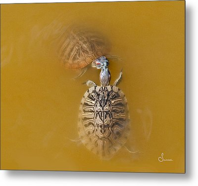 Turtle Kiss Metal Print by Sally Mitchell