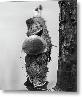 Turtle On A Log - Bw Metal Print