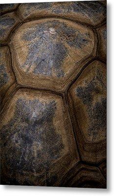 Turtle Shell Metal Print by Racheal  Christian