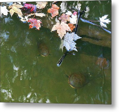Metal Print featuring the photograph Turtles And Leaves In The Water by Irina Sztukowski