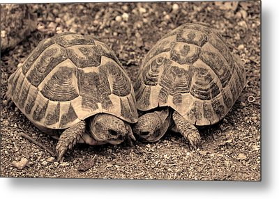 Metal Print featuring the photograph Turtles Pair by Gina Dsgn