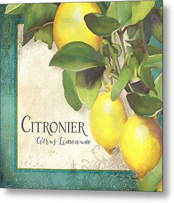 Tuscan Lemon Tree - Citronier Citrus Limonum Vintage Style Metal Print by Audrey Jeanne Roberts
