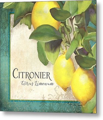 Tuscan Lemon Tree - Citronier Citrus Limonum Vintage Style Metal Print