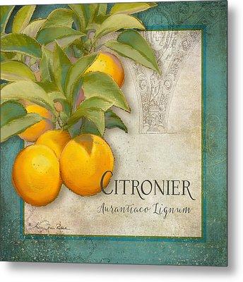 Tuscan Orange Tree - Citronier Aurantiaco Lignum Vintage Metal Print by Audrey Jeanne Roberts
