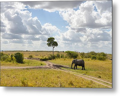 Tusker Scape Metal Print