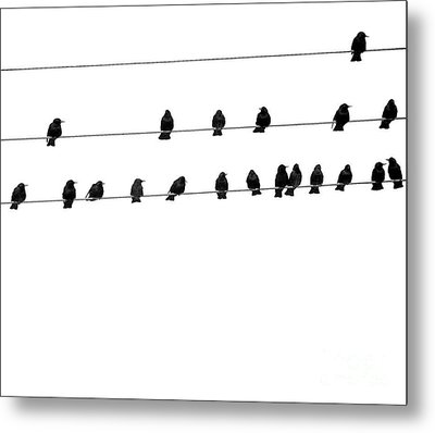 Twenty Blackbirds Metal Print