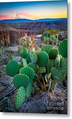 Twilight Prickly Pear Metal Print by Inge Johnsson