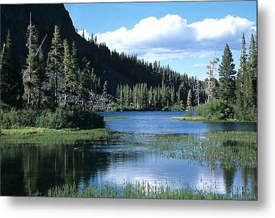 Twin Lakes And Ducks Feeding Metal Print by Don Kreuter