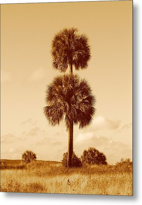 Metal Print featuring the photograph Twin Palms by Peg Urban