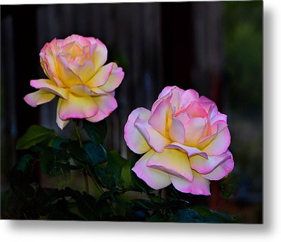 Twin Roses Metal Print by Josephine Buschman