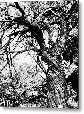 Metal Print featuring the photograph Twisted Beauty by Allan McConnell