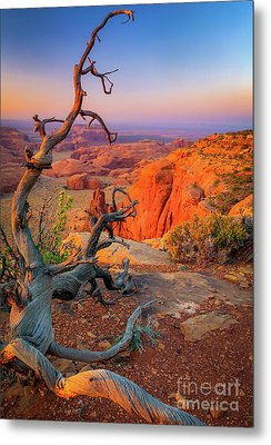 Twisted Remnant Metal Print by Inge Johnsson