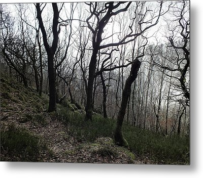 Twisted Woods Metal Print by Philip Openshaw