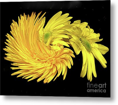 Metal Print featuring the digital art Twisted Yellow Daisies by Merton Allen