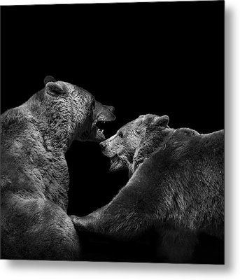 Two Bears In Black And White Metal Print by Lukas Holas