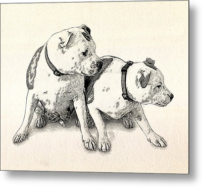 Two Bull Terriers Metal Print by Michael Tompsett
