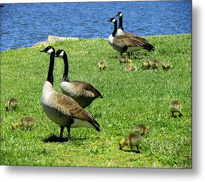 Metal Print featuring the photograph Two By Two  by Sandi OReilly
