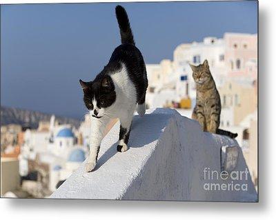Two Cats, Cyclades Islands Metal Print by Jean-Louis Klein & Marie-Luce Hubert