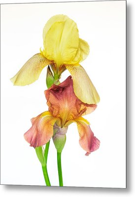 Two Colors Of Iris Metal Print