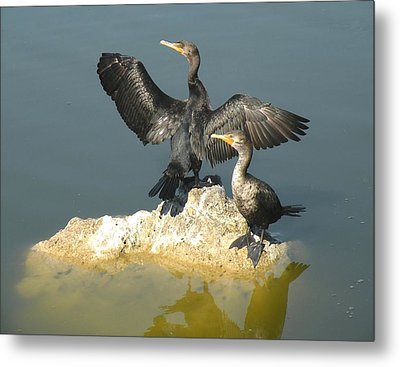 Metal Print featuring the photograph Two Cormorants by Rosalie Scanlon